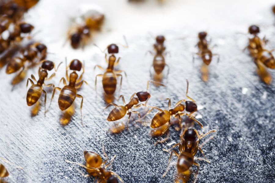 Why Are There Ants in My Car!? (And What to Do About it)