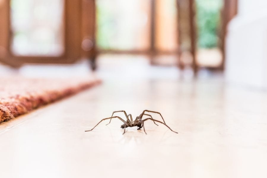 10 Easy Ways to Keep Spiders Away From Your Bed While Sleeping