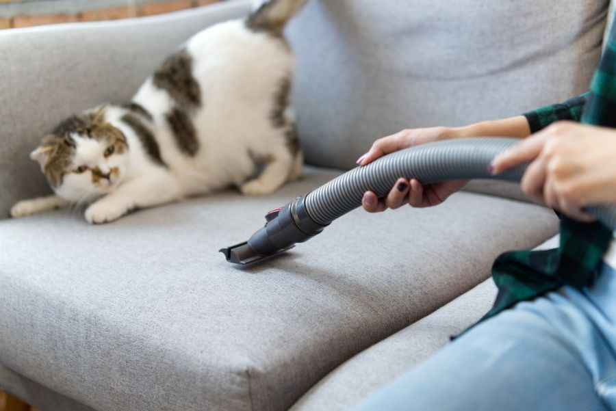 Can I Vacuum My Cat!? (Or Is There a Better Option?)