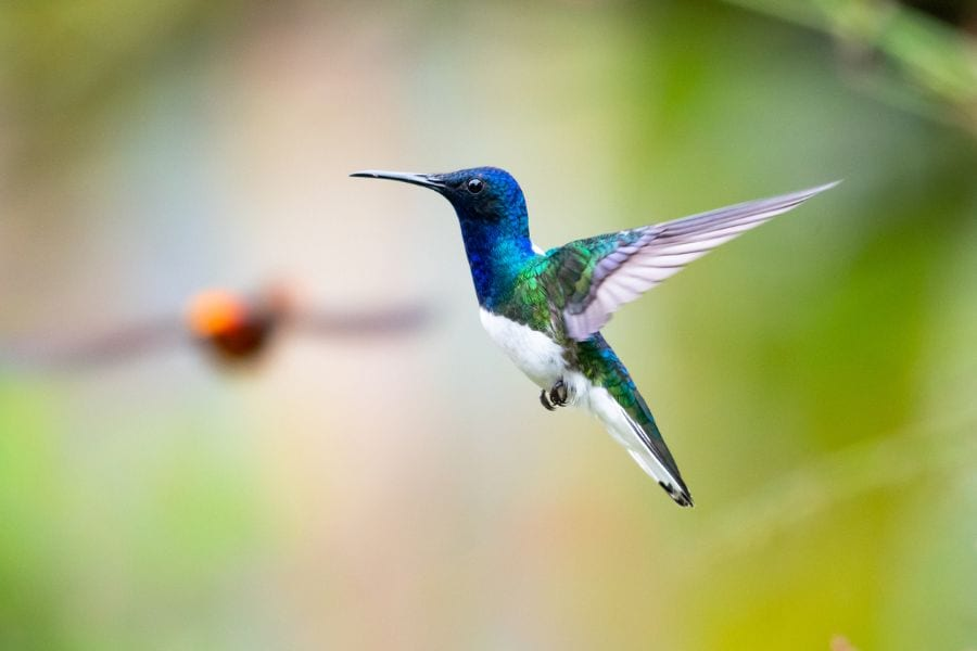Why Do Hummingbirds Hover in Your Face? (4 Common Reasons)